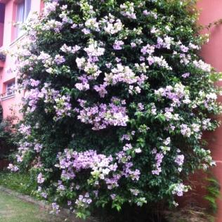 Muitas flores