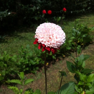 Rosa e vermelho - linda!