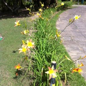 Em cada canteiro um tipo de flor