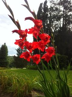 As flores mais lindas