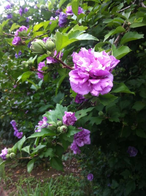 No caminho havia uma flor...